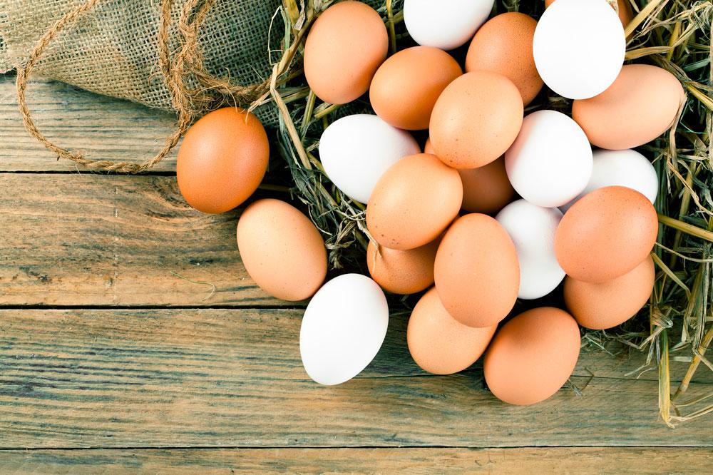 CURIOSIDADES: Por que têm os ovos cascas de cores diferentes?