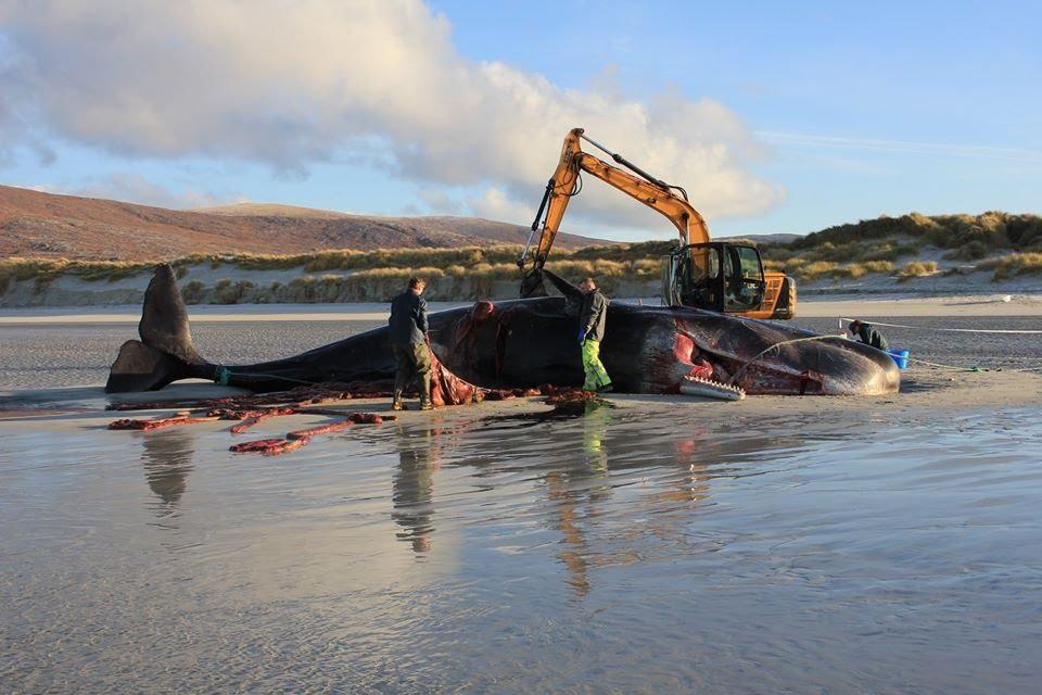 Baleia morre na praia com 100 quilos de lixo no estômago