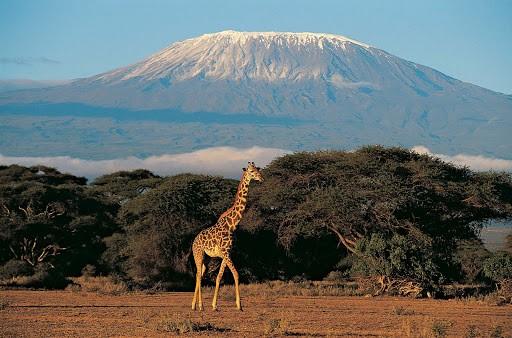 África e seus encantos