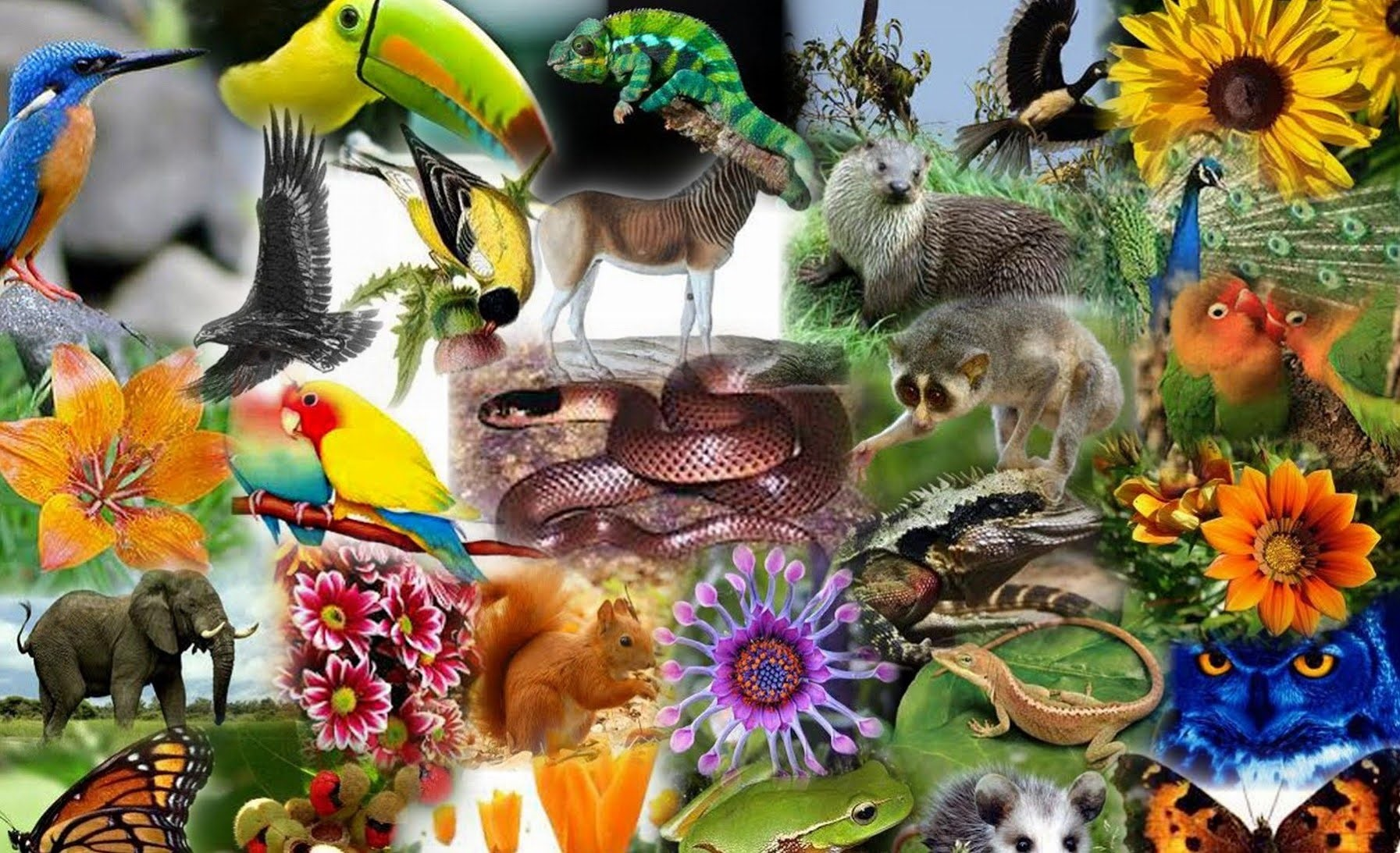 Dia da Biodiversidade