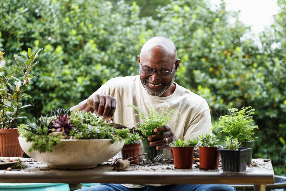 Como cuidar do jardim