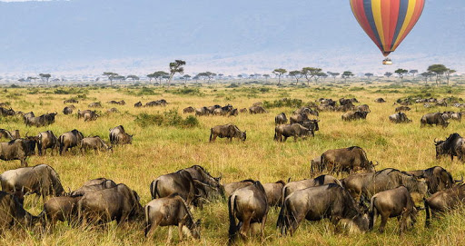 Safari pelo Quénia