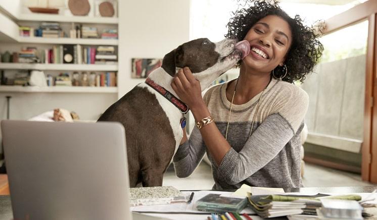 O seu home working será melhor com animais de estimação, saiba o porquê