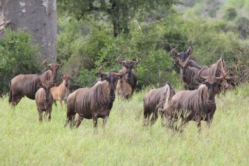 """Um lugar para visitar é o """"Parque Nacional da Quiçama"""""""