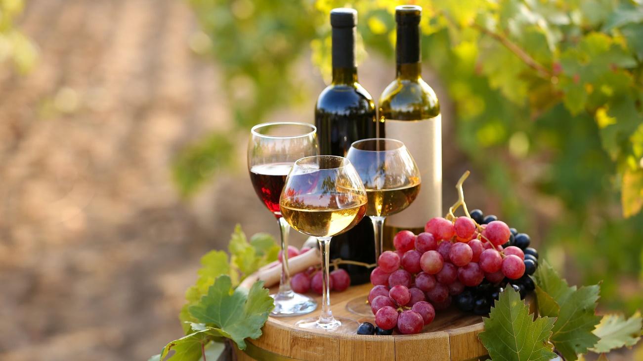 Por que é que estes são os melhores vinhos da Argentina e do mundo?
