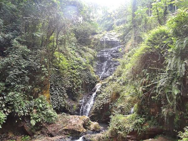 Floresta do Mayombe, a bela Maravilha Natural de Angola