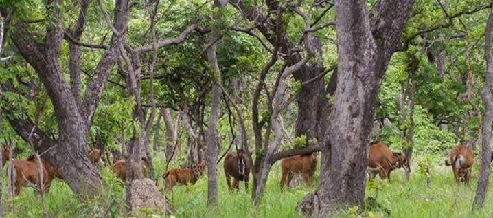 Leve os seus filhos a conhecer o Parque Nacional da Cangandala