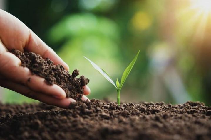 A Associação Voluntários do Luena planta acácias ao longo da Estrada Nacional 180, na Cidade do Luena