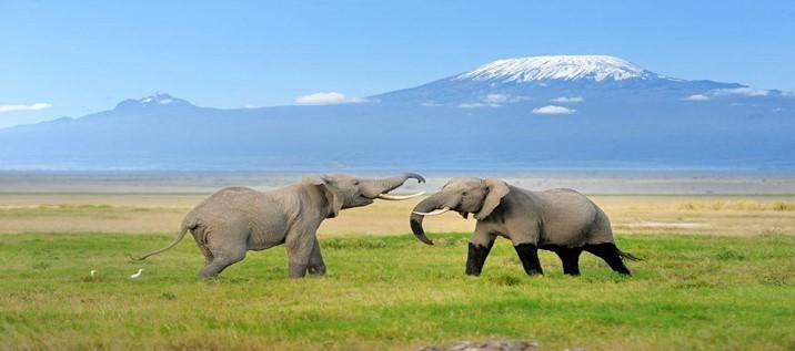 Na Tanzânia, não deixe de visitar o Monte Kilimanjaro