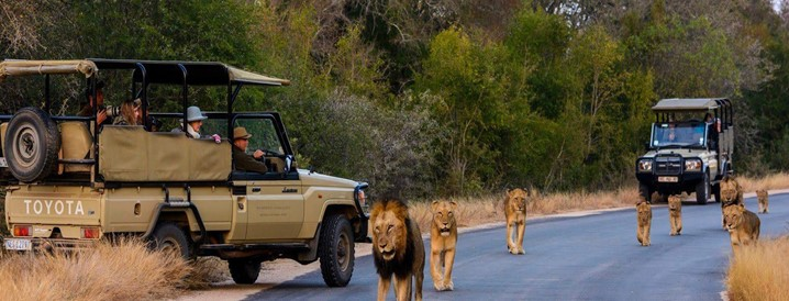 Faça turismo rural visitando o Parque Nacional Kruger, na África do Sul