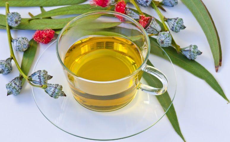Vai um chá de eucalipto?