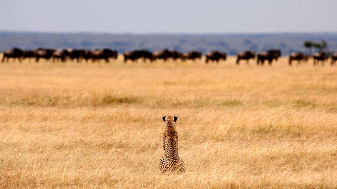Conheça o lindo safari da Tanzânia