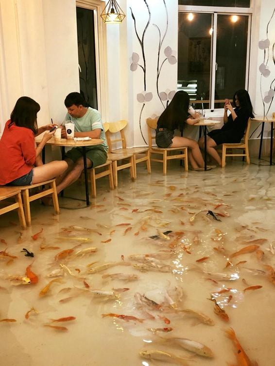 Ikan, o café inundando