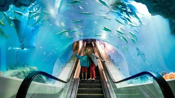 Conheça a Escada rolante sub-aquática na China