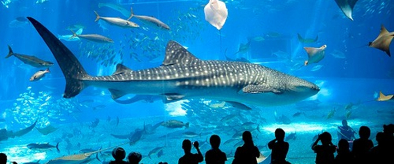 Visite o aquário de Barcelona!